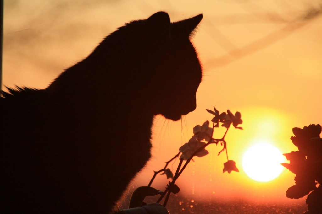 13.5-sunset 008