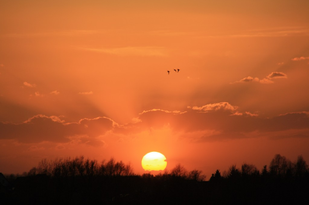 13.5-sunset 020